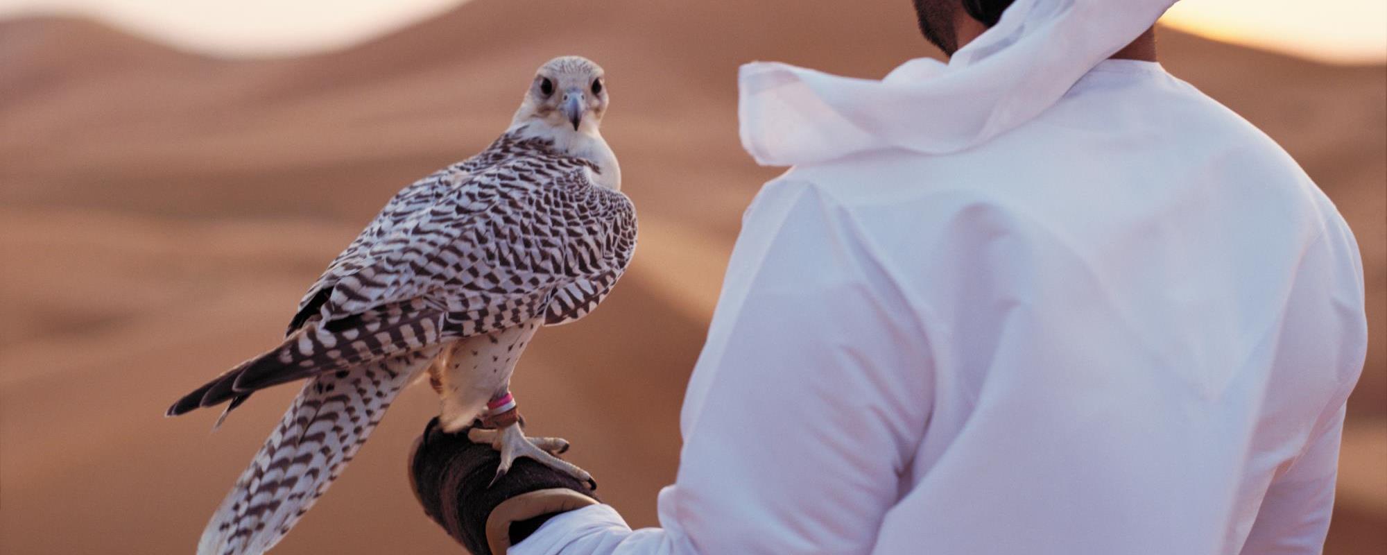 Falconry Visitabudhabi Ae