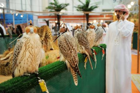 Abu Dhabi International Hunting and Equestrian Exhibition 2015