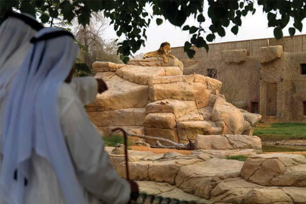 AWPR Al Ain Zoo Lion