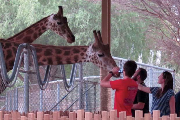 AWPR Giraffe Feeding