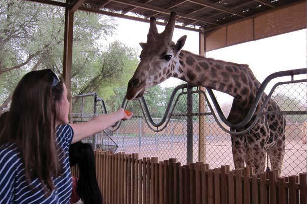 AWPR Giraffe