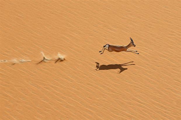 /DataFolder/Images/Events/2014-abudhabi-desert-challenge/Abu-Dhabi-Desert-Challenge-2013-72.jpg