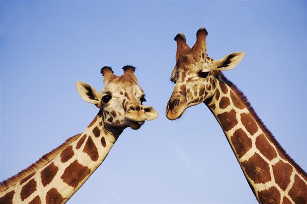 /DataFolder/Images/Where_to_stay/Al-Ayam/Desert-Islands-Resort-and-Spa-by-Anantara-Giraffe.jpg