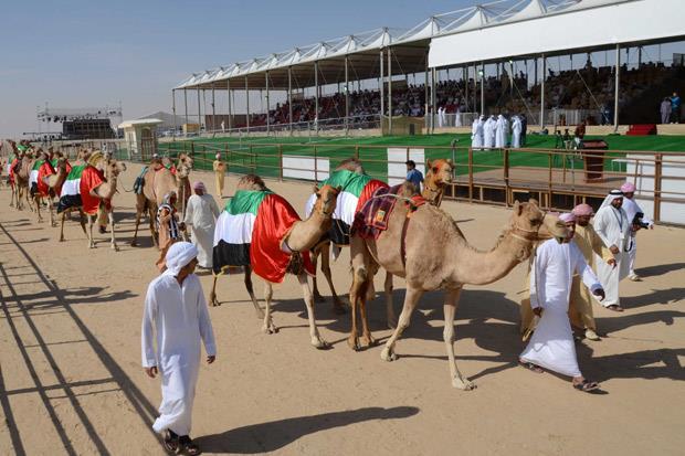 /DataFolder/Images/Events/Al Dhafra/al_dhafrah_camel_festival_14.jpg