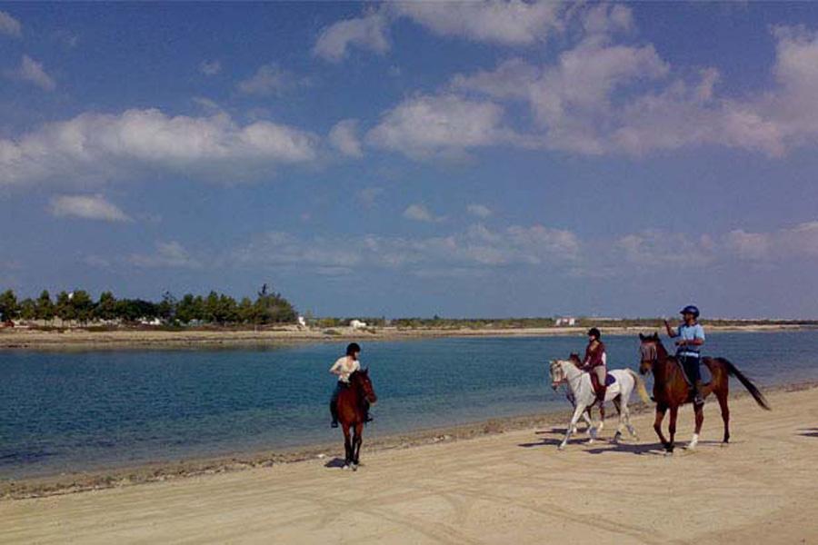 Dhabian Equestrian Club In Abu Dhabi Visitabudhabi Ae