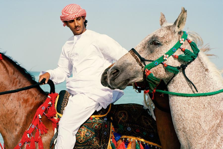 Arabian Horses Visitabudhabi Ae